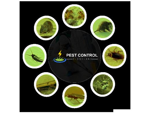 Pest Control Cleveland
