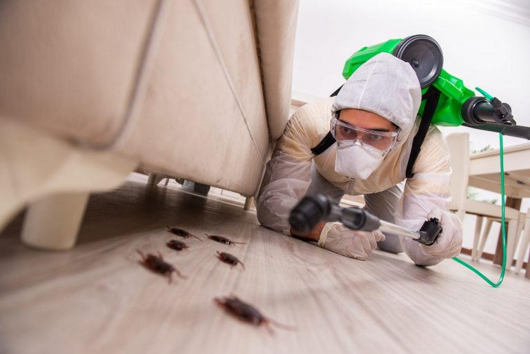 pest control treatment in Cleveland